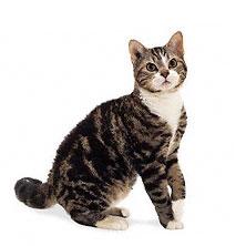 кошек и фото в картинках породы
