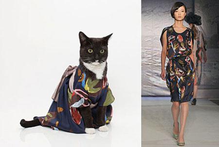 cat s модельное агентство:
