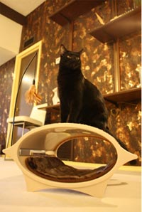 elegant accessories and stylish furniture for cats
