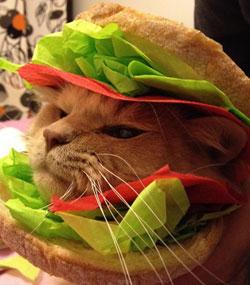 Кошки в хлебе