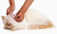 кошкам чистят глаза и уши