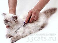 Кошка: уход за шерстью, вычесывание