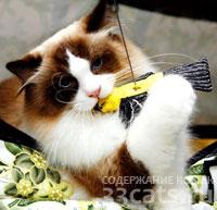 кошкам нужны игрушки