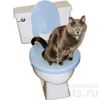 приучение кошки к унитазу