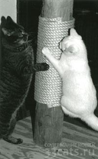 Когтедерка для кошек вертикальная