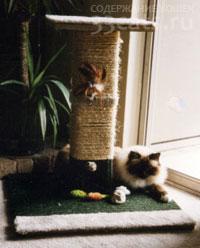 игровой комспекс для кошек с когтеточкой