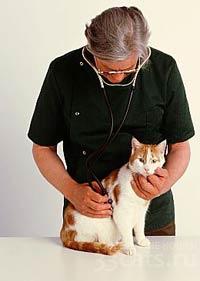 Визит к ветеринару с кошкой