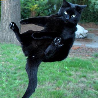 Падающая кошка  википедия