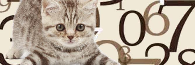 Имя кота по гороскопу